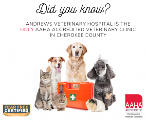 AAHA Accredited Veterinary Hospital in Cherokee County NC